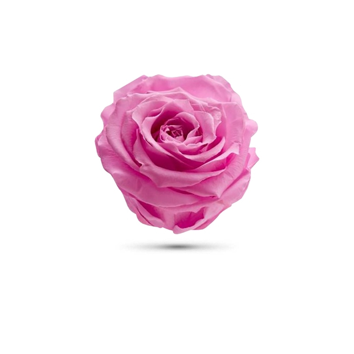 <h4>Rosa preservada cabeza rosa claro</h4>