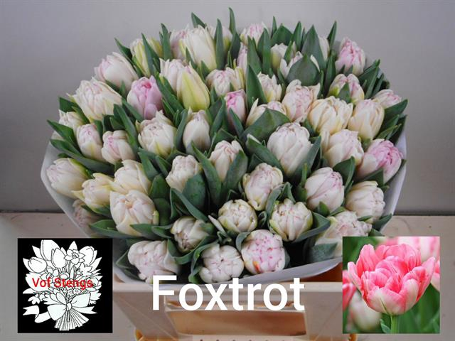 <h4>TU DU FOXTROT</h4>