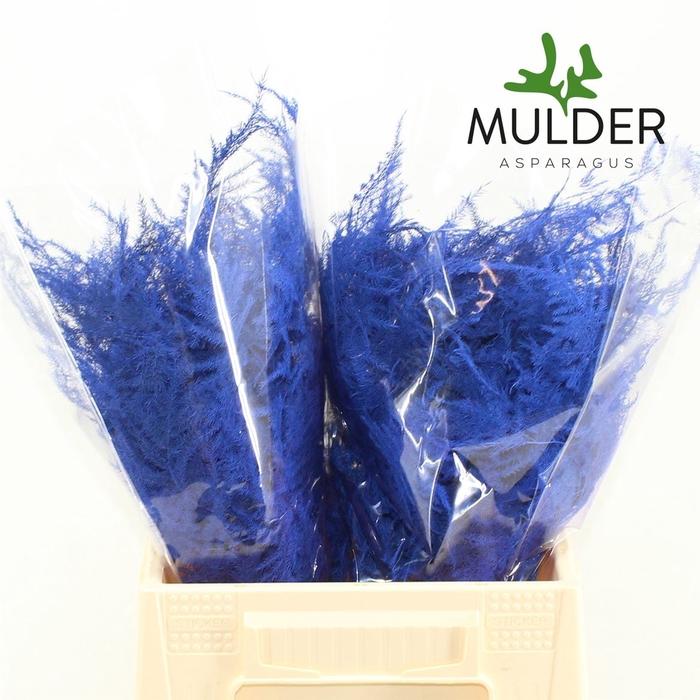 <h4>1e Veren Klb H% Blue</h4>