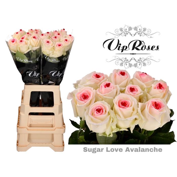<h4>R GR SUGAR LOVE AVALANCHE X 20</h4>