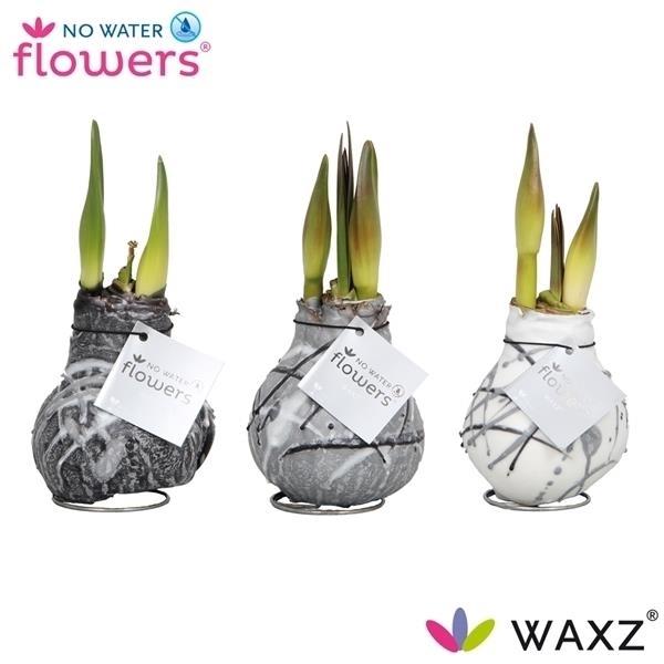 <h4>No Water Flowers Waxz® Art Vermeer</h4>