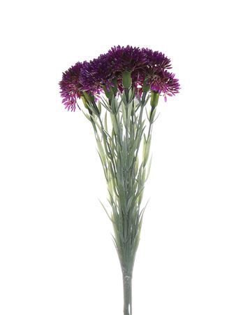 <h4>Allium bundle purple x10 w/flo</h4>