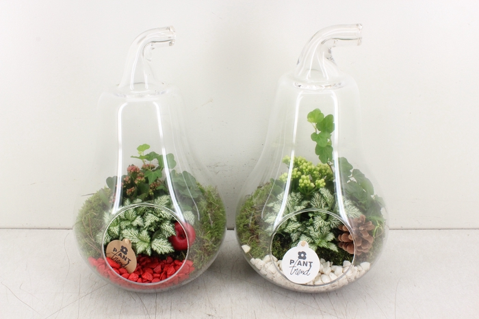 arr. PL - Glazen peer XL x2 - rood/wit