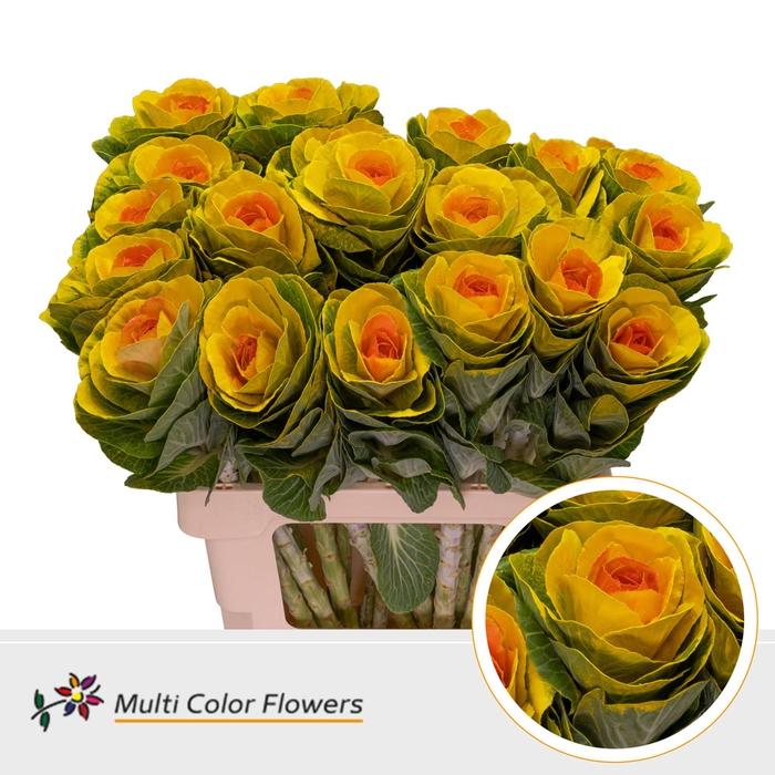 <h4>Brassica  Geel Hart Oranje</h4>