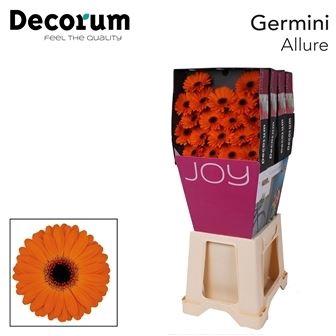 <h4>Germini Allure</h4>