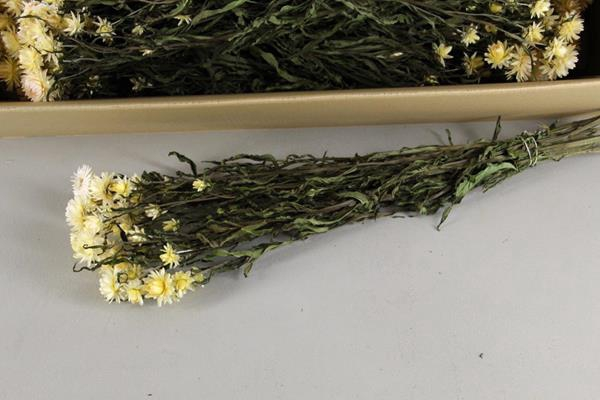 <h4>Df Helichrysum White Bs</h4>