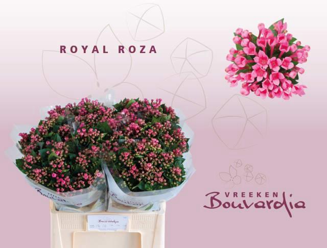 <h4>Bou En Roza</h4>