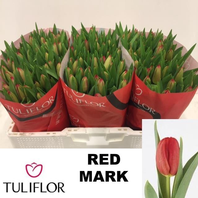 <h4>TU EN RED MARK</h4>