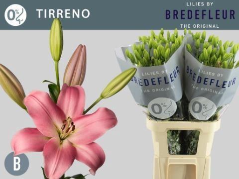 <h4>Li La Tirreno</h4>