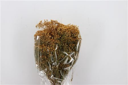<h4>DRIED BROOM NATURAL 150GR POLY BUNC</h4>