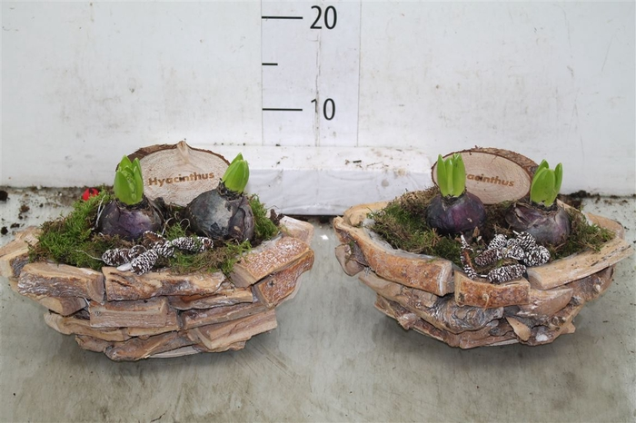<h4>Arr Hyacinth In Houten Bootvorm</h4>