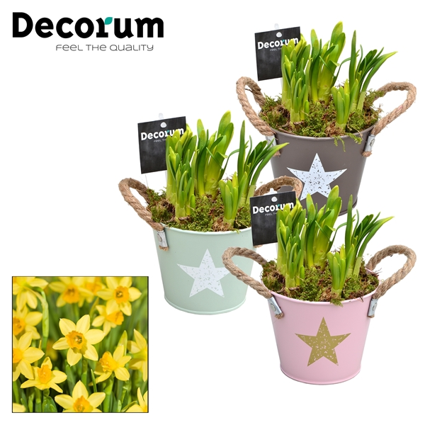 <h4>Narcis Star Bucket Maxi HL10643N</h4>