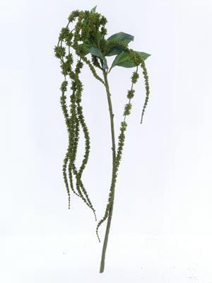 <h4>Af Amaranthus 26 Green</h4>