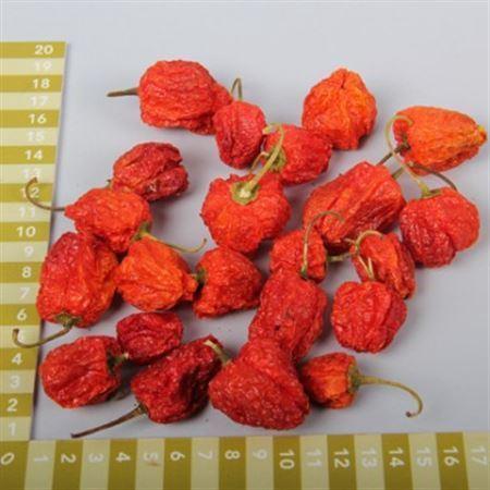 <h4>Basic Chilli Round Orange 40gr</h4>