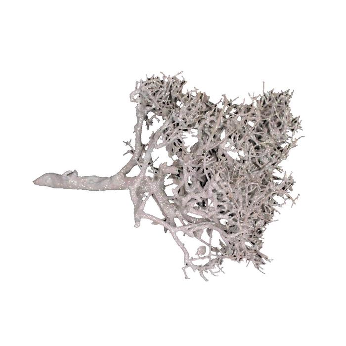 <h4>Bonsai twig small p.pc White with Pearl Glitter</h4>