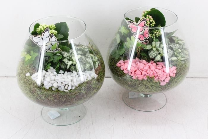 <h4>arr. PL - Glas Cognac - roze/wit</h4>
