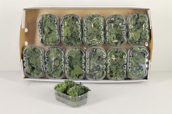 <h4>Moss Icelandic Dark Green Box</h4>
