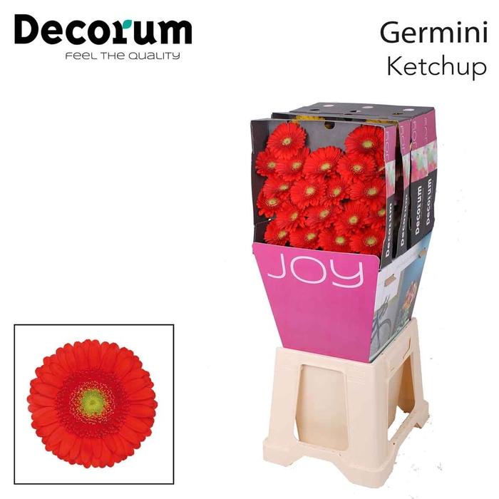 <h4>Ge Mi diamond Ketchup</h4>