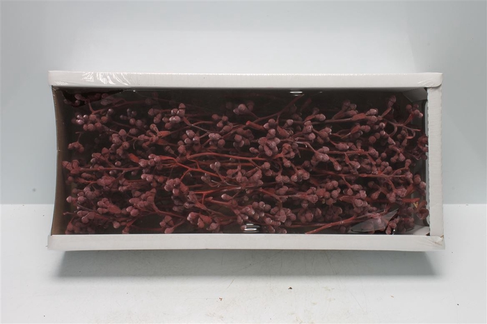 <h4>Mushroom Gum Branch Red Frosted (50 St)</h4>