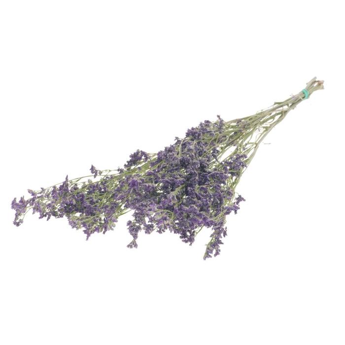 <h4>Limonium natural purple</h4>