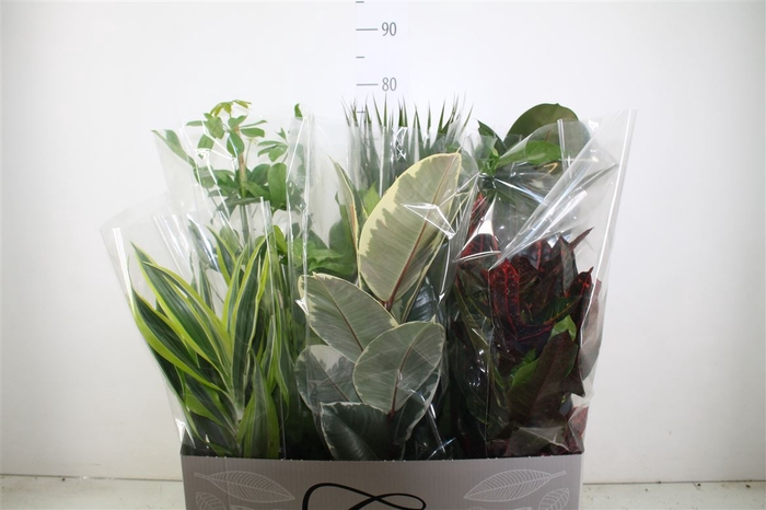 <h4>Plant Mix Groot</h4>