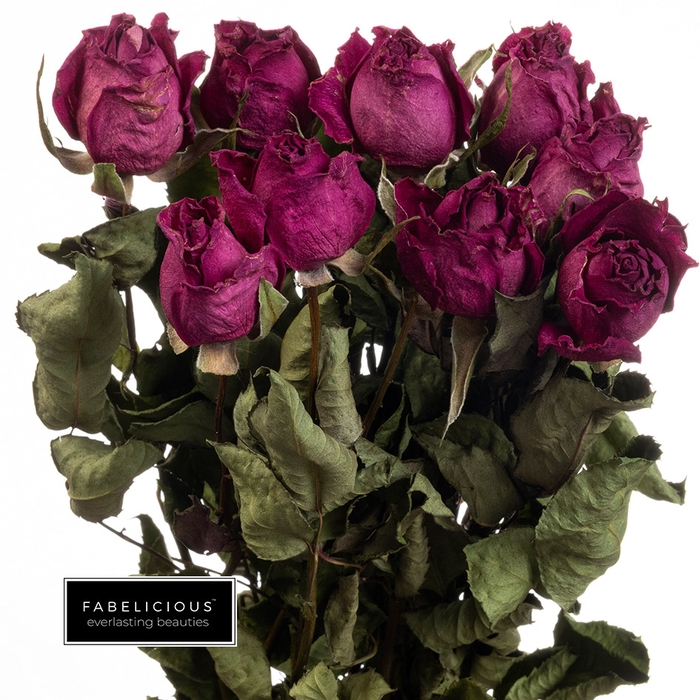 <h4>Dried Rosa grootbloemig Royal Jewel</h4>