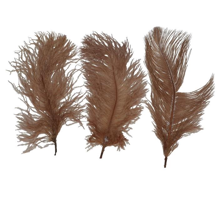 <h4>Veren Struisvogel 20-25cm x10</h4>