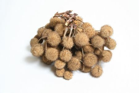 <h4>Bunch Platana Small Ball 230-250gr</h4>