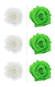 <h4>R Gr Prsv White - Green Glow</h4>
