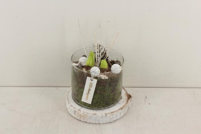 <h4>arr.. Hyacint MB - Cilinder cocos schijf</h4>