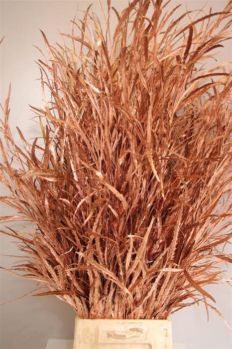 <h4>Grevilea Copper</h4>