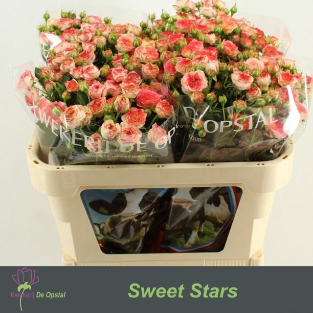 <h4>R TR SWEET STARS</h4>