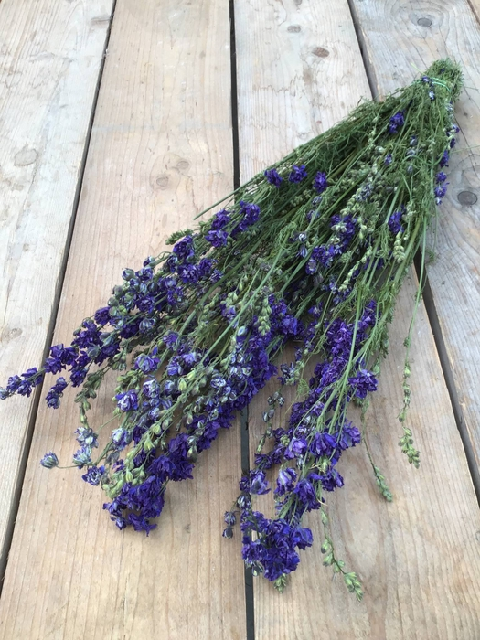 <h4>DRIED DELPHINIUM BLUE EXTRA BUNCH</h4>