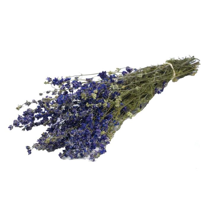 <h4>Delphinium blue natural</h4>