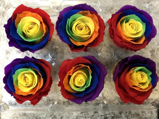 <h4>R Prs Rainbow G Flag</h4>