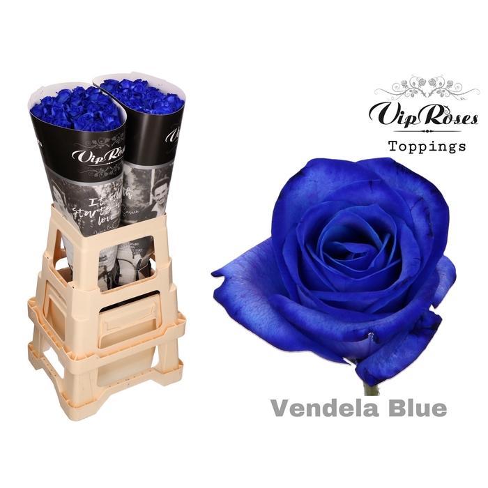 <h4>R GR VENDELA BLUE</h4>