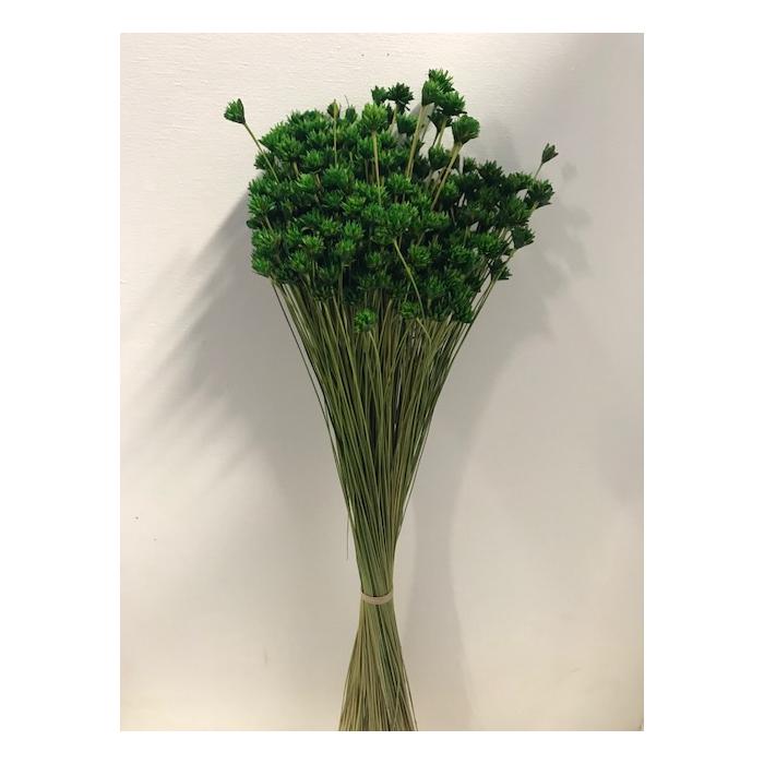 <h4>Hill flower groen 45cm 100gr</h4>