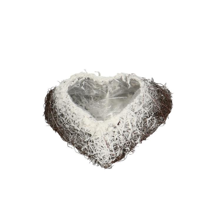 <h4>Allerheiligen Salim planter hart+sneeuw 25cm</h4>