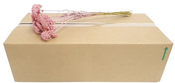 <h4>Achillea per stem frosted Pink</h4>