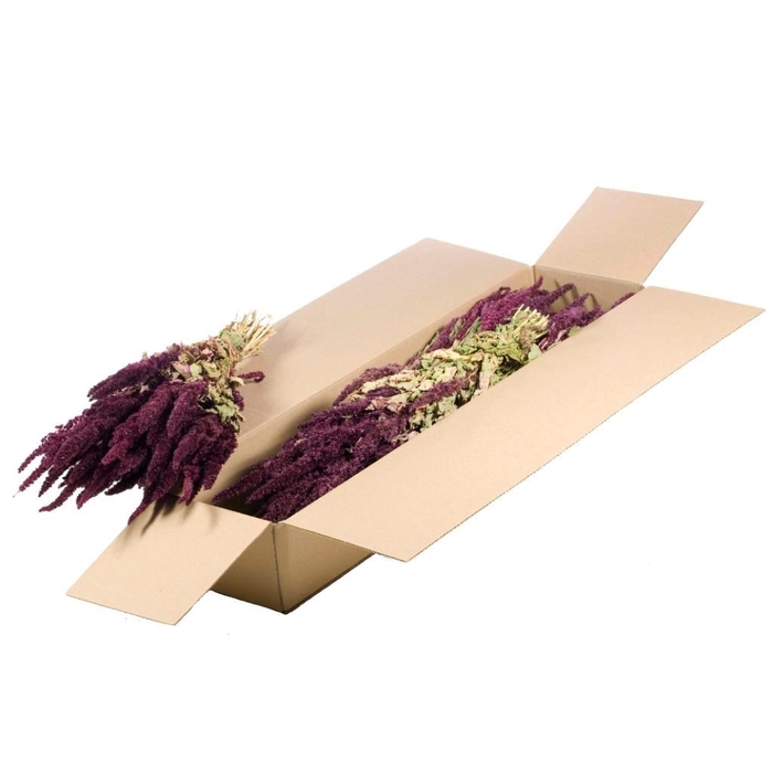 <h4>Amaranthus SB red natural</h4>
