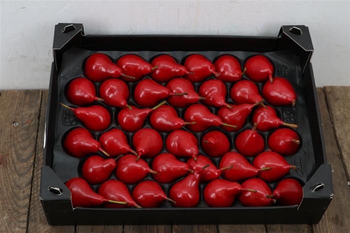 <h4>Waxpeer Rood Kerst</h4>