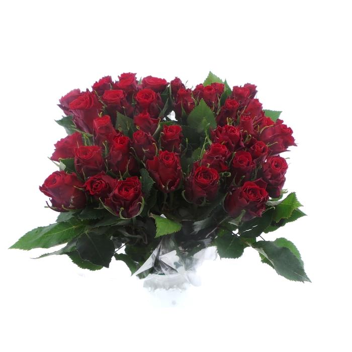 <h4>Bouquet Mono Rozen Rood x10 50cm</h4>