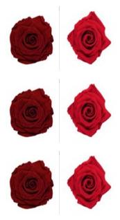<h4>R Gr Prsv Deep Red - Frank Red</h4>