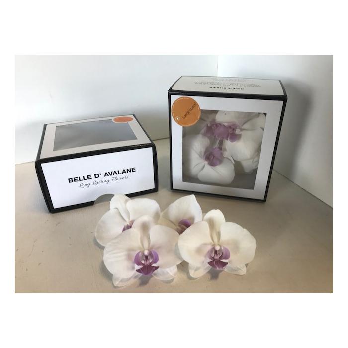 <h4>Phalaenopsis Large wit</h4>