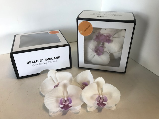 Phalaenopsis Large wit