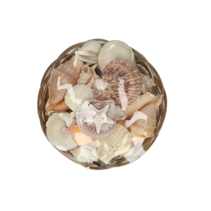 <h4>Shell Mix Midrib ass. d20*9cm</h4>
