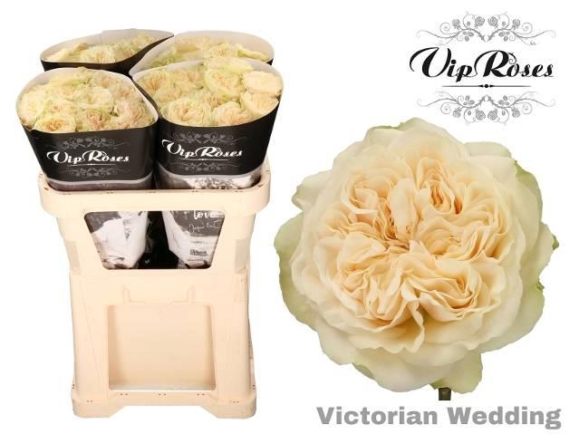 <h4>R GR VICTOR WEDDING+</h4>