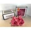 Cymbidium L. Roze (pink700)