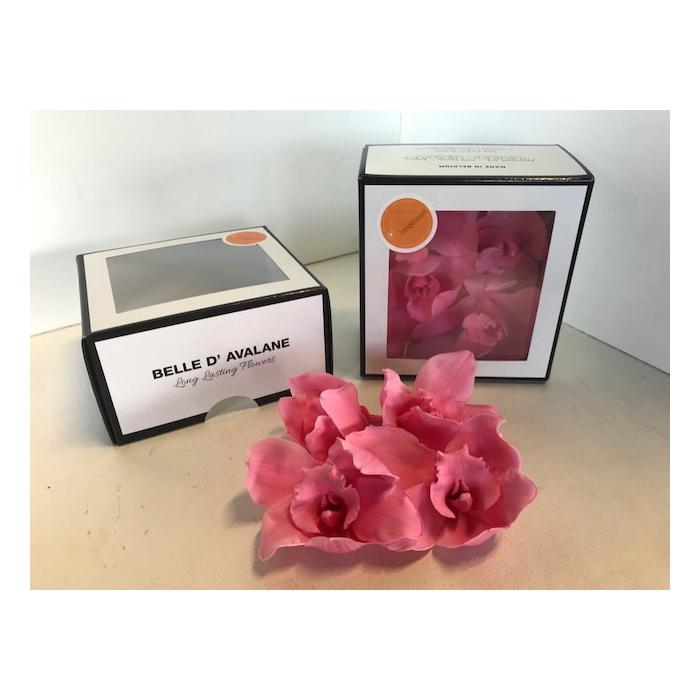 <h4>Cymbidium L. Roze (pink700)</h4>