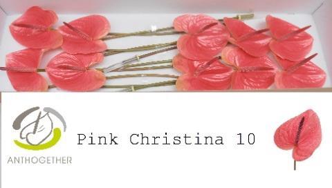 <h4>ANTH A PINK CHRIS</h4>
